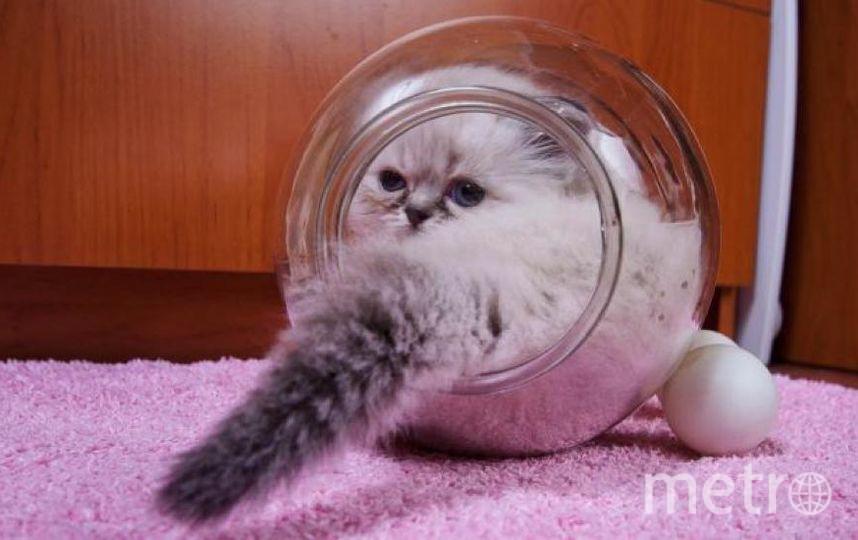 Физик доказал, что кошки - это жидкость.