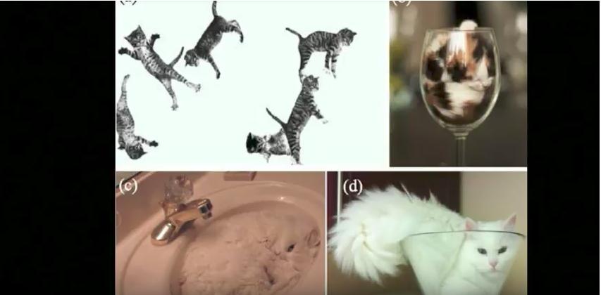 Ученый Марк-Антуан Фардин доказал, что кошки – это жидкость. Фото скрин-шот Youtube