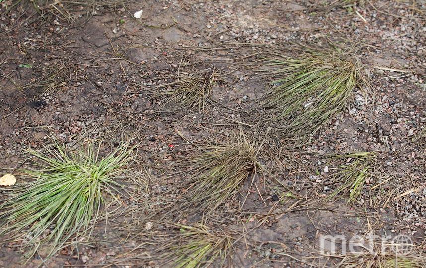 Вытоптанный газон. Фото Василий Кузьмичёнок
