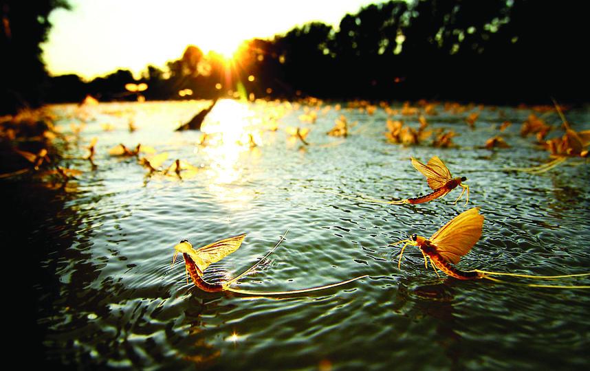 """победитель в категории """"Окружающая среда"""", 2011 год. Фото Снимок участника конкурса Сандора Ксудая из Венгрии"""