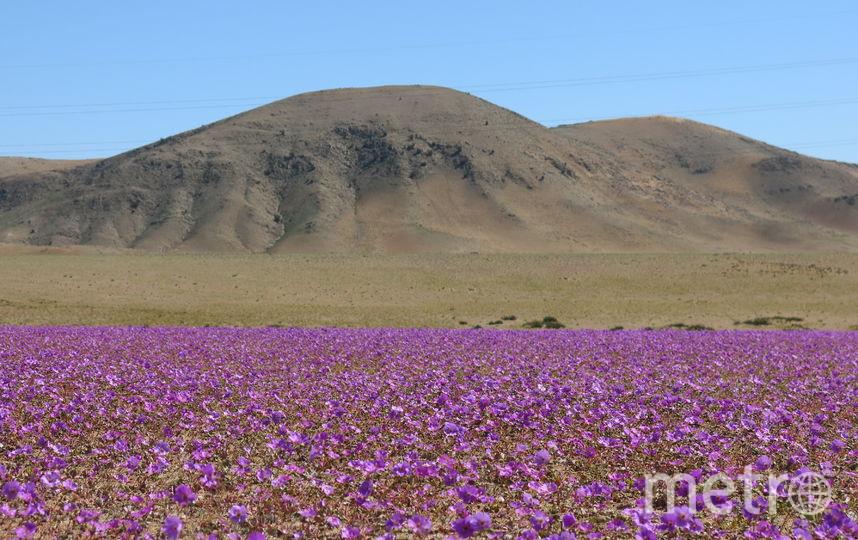В некоторых местах пустыни осадки выпадают раз в несколько десятков лет. Фото Пилар Гил