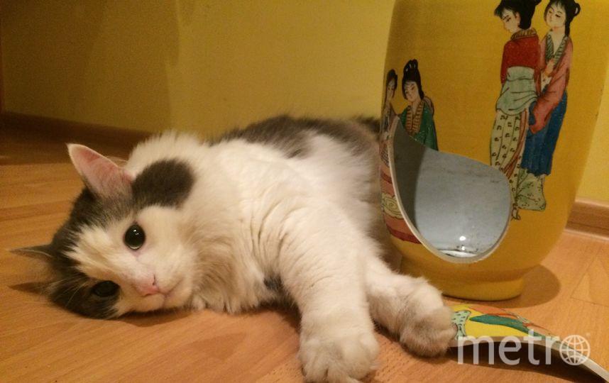 Это наш кот с финским именем Юкка. Мы нашли его на улице 5 лет назад - он был очень худым и грязным, а сейчас это роскошный кот с хулиганским характером:) Разбил вазу и очень расстроился. Лена.