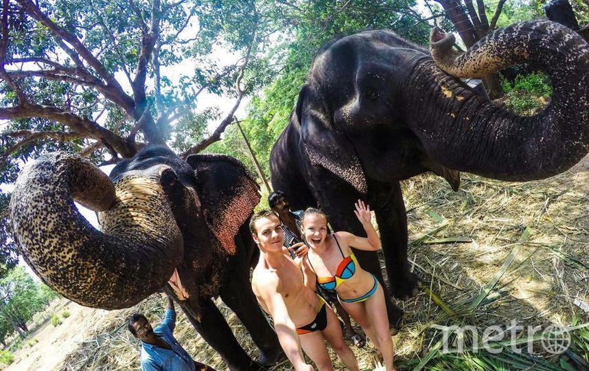 За это лето мы побывали во множестве стран нашей планеты. Самая яркая фотография получилась с Индийскими слониками в штате Гоа. Слоны долгожители, им более 80 лет. Мордовцев Марк Георгиевич.