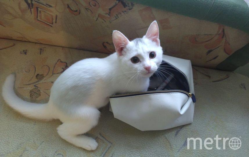 Наша любимая кошка Катя игривая и чуть-чуть хулиганистая. Особенно любит косметичку, находит для себя нужные штучки, вытаскивает и гоняет по всей квартире. Фото Тамара Коротаева