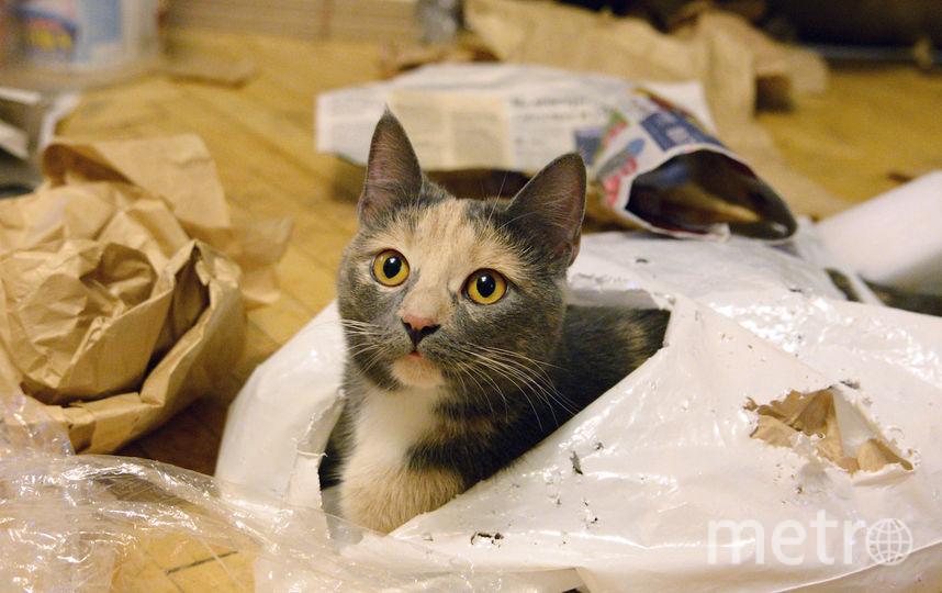Обнаружив такое, хулиганку Мади не просто было вытащить из разгрызанного ею пакета и кучи разорванных бумаг. Фото Дмитрий