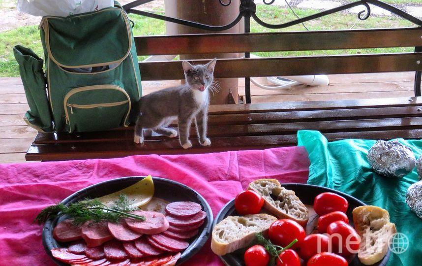 Мой котик Семён между прыжками и варварскими нападениями на колбасу. Фото Феодосий Ячменев-владелец кота