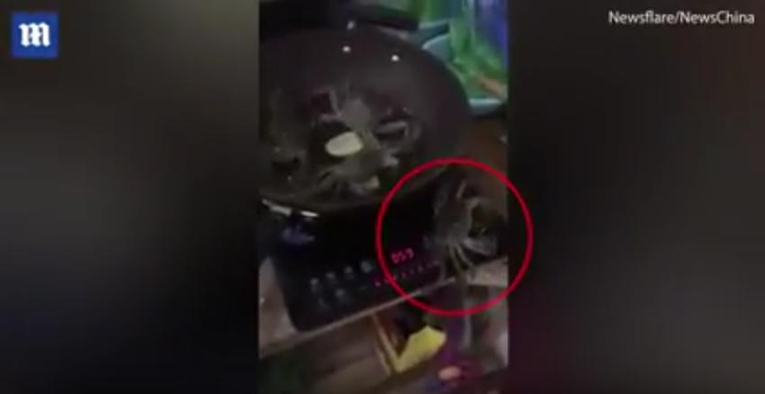 Краб спрыгнул с раскаленной сковороды и спас своих собратьев. Фото Скриншот Youtube