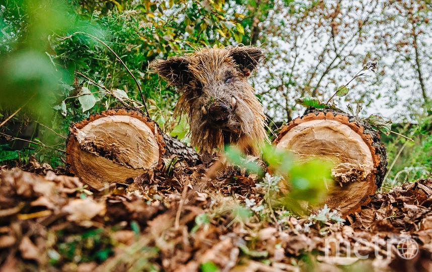 Голова кабана из болотной травы. Фото Предоставлено организаторами выставки.