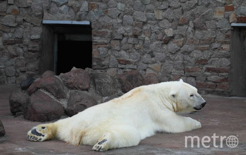 Ленинградский зоопарк. Фото vk.com/spbzoopark, vk.com