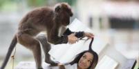 Видео с обезьянкой в парикмахерской покорило Сеть