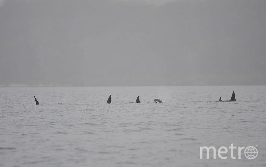 Китов убивали ради исследований. Фото Getty