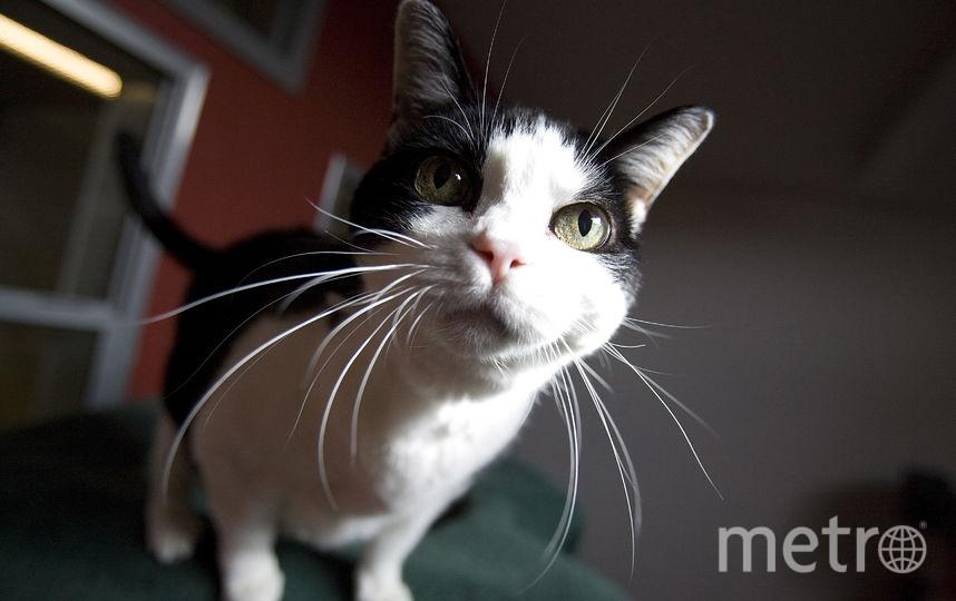 Получить консультацию ветеринара теперь можно в приложении. Фото Getty