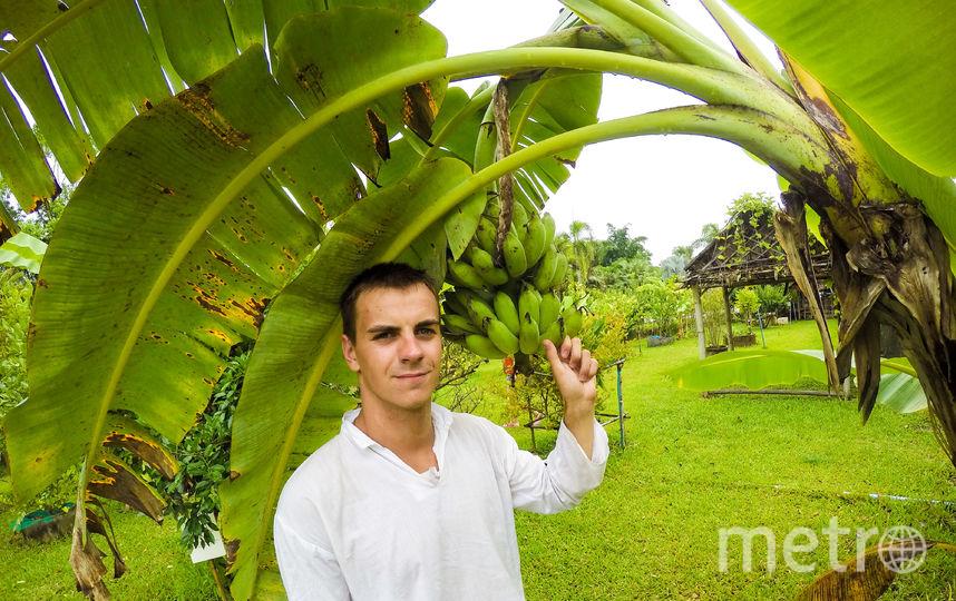 Все лето я провел в Таиланде и ел бананы с дерева. Фото Марк Мордовцев