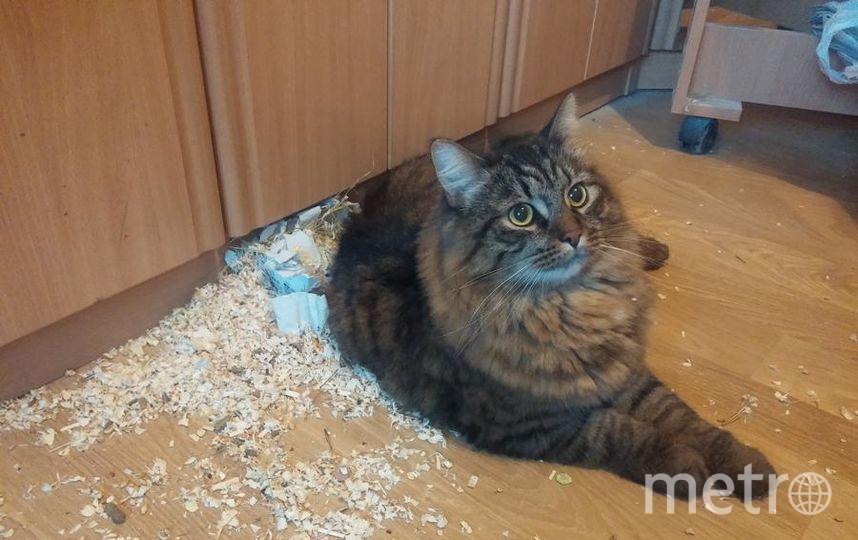 Наш Пуш очень общительный кот и любит поболтать с другими животными, в частности с хомяком. В этот раз беседа с хомяком не состоялась. Клетка перевернулась, ее содержимое высыпалось на пол, хомяк успел убежать и спрятаться в комнате. Хозяйка Васильевская Алиса.