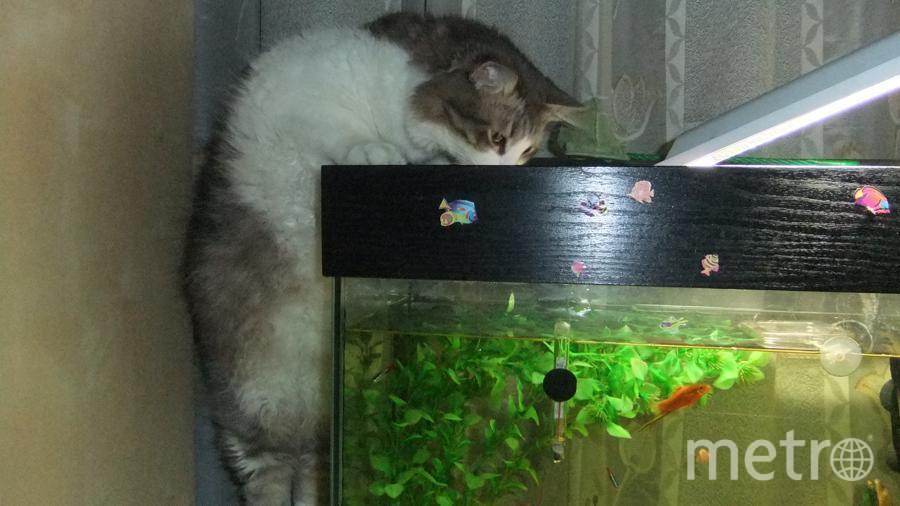 """Это наш """"найденыш"""" Марсик. """"Я не хулиган... Это я просто на них смотрю"""". А до этого момента было прихватизировано шесть рыбок. Фото Пугач Анатолий Викторович"""