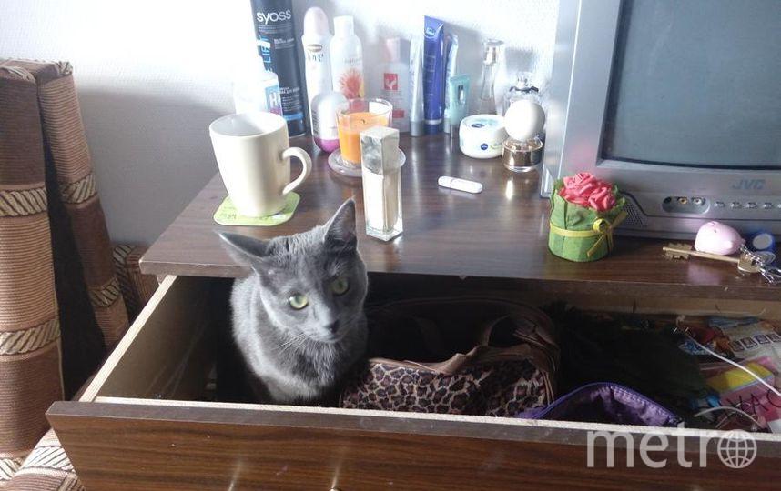 Моя кошка Соня как и любая девушка очень любит всякие сумочки, косметику, побрякушки и никогда не упускает возможности проверить все мои ящики, коробки.