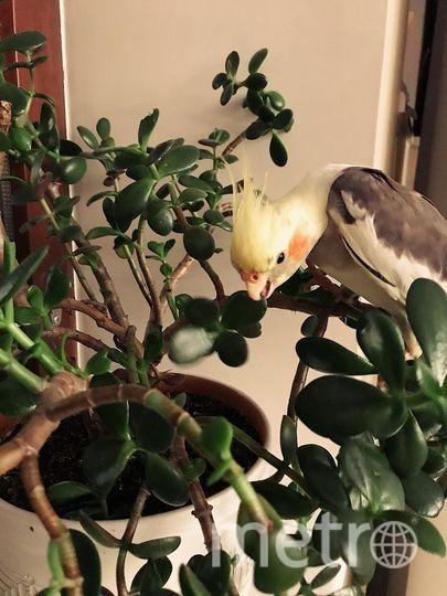 Почему все думают, что хулиганят только собаки и кошки? Это ведь неправда, вот птицы тоже любят побаловаться, знакомьтесь это Чарли и он любит цветы.