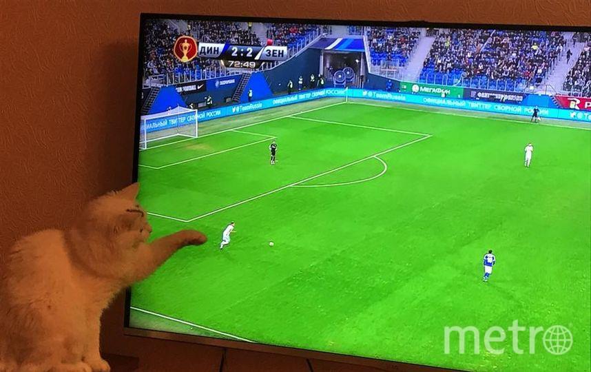 """Знакомьтесь, наша любознательная Снежка)) очень любит смотреть телевизор, а также погонять мяч вместе с футбольной командой """"Зенит"""". Фото Зайцева Анастасия."""