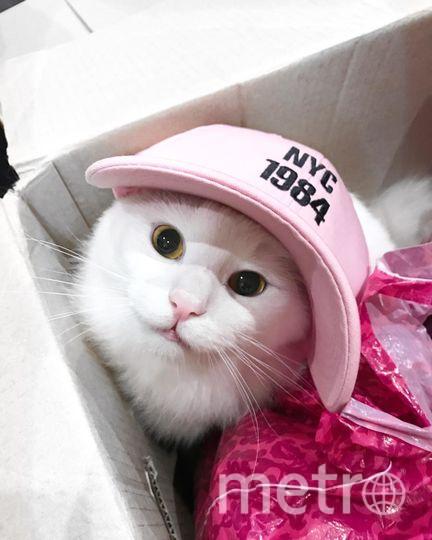 Это наш любимый кот Тихон,не успеешь оглянуться ,а его розовый носик уже торчит из очередной коробки, оставленной без присмотра. Фото Степанова Марина
