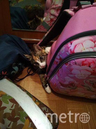 Наша кошка Ксюша!Каждое утро, когда дочка собирается в школу, Ксюша захватывает рюкзак и не отпускает.