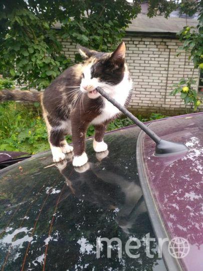 .Эту очаровательную хулиганку зовут Фиби, она постоянно проверяет что-нибудь на прочность)) на этот раз проверку проходит корейский автопром. Фото Олеся Поединок.