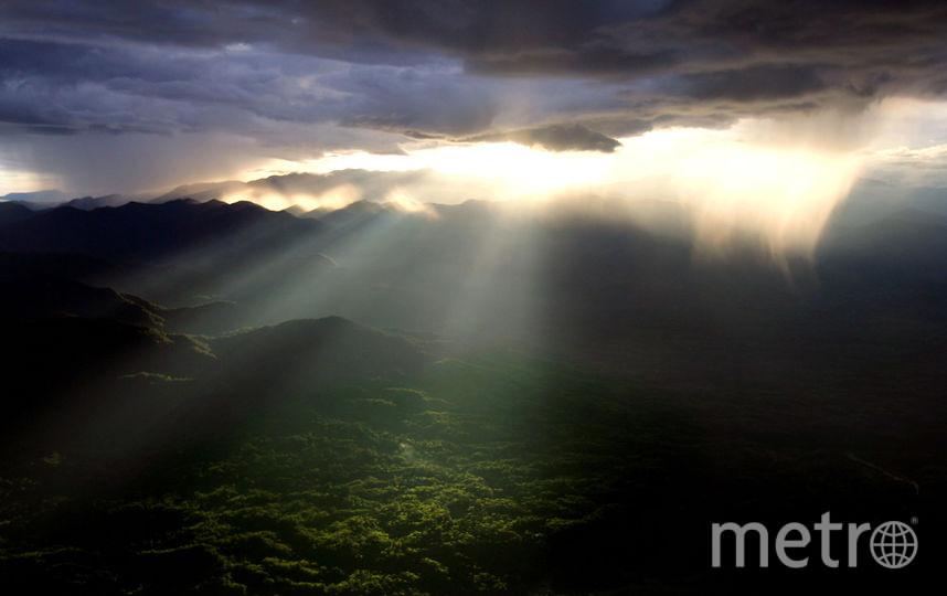 Тропический лес. Фото Getty