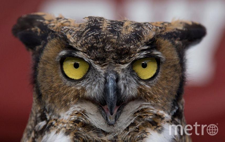 """Ученые выяснили, кто общительнее: """"совы"""" или """"жаворонки"""". Фото Getty"""