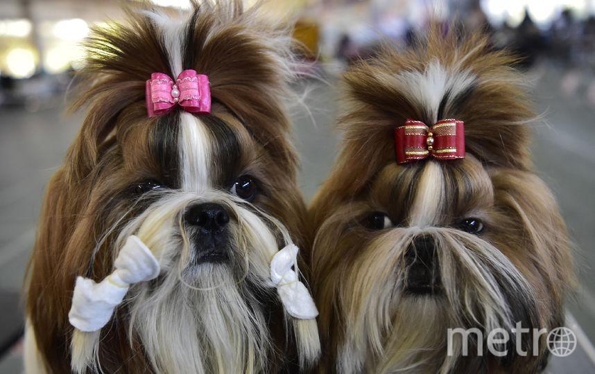 Международная выставка собак в Бишкеке. Фото AFP