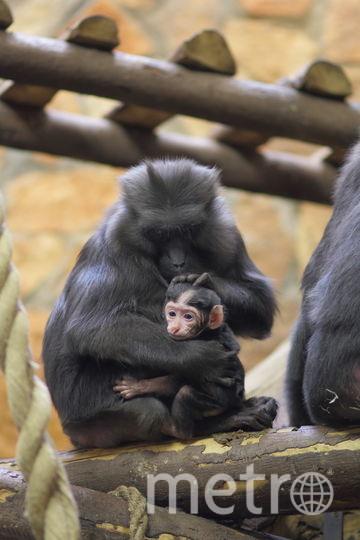 Мишель и новорожденный малыш. Фото Фото предоставлено Ленинградским зоопарком.