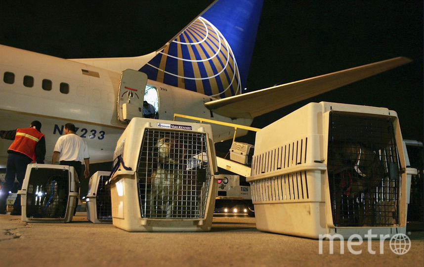 Перевозка животных в самолёте. Фото Getty