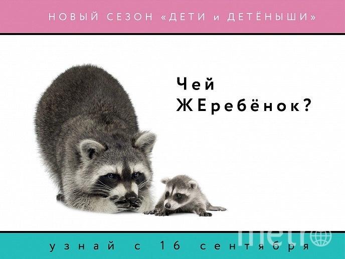 """Дети и детёныши. Фото предоставлено организаторами., """"Metro"""""""