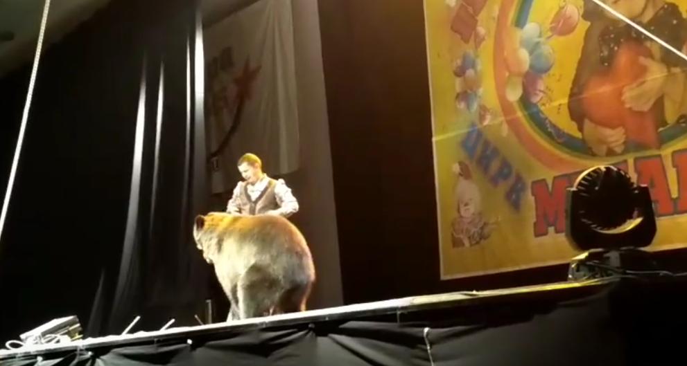 Медведь напал на дрессировщика. Фото Все - скриншот YouTube
