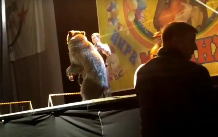 Медведь напал на дрессировщика.