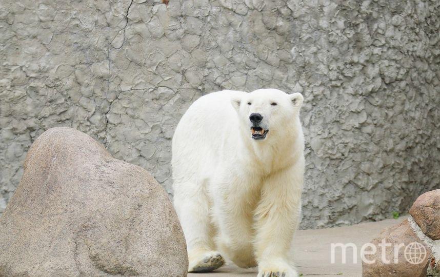 Ленинградский зоопарк. Фото vk.com