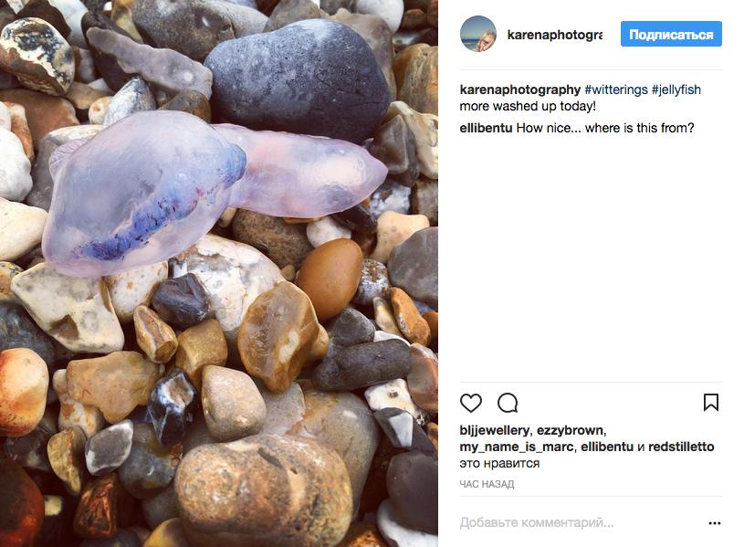 Смертельно красивые: Ураган вынес на британские пляжи опасных медуз. Фото Скриншот Instagram