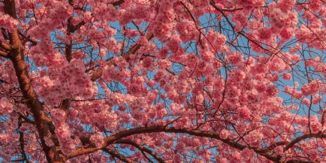 Цвета весны.