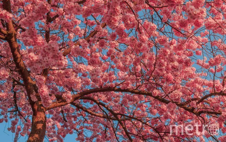 Цвета весны. Фото www.metrophotochallenge.com.
