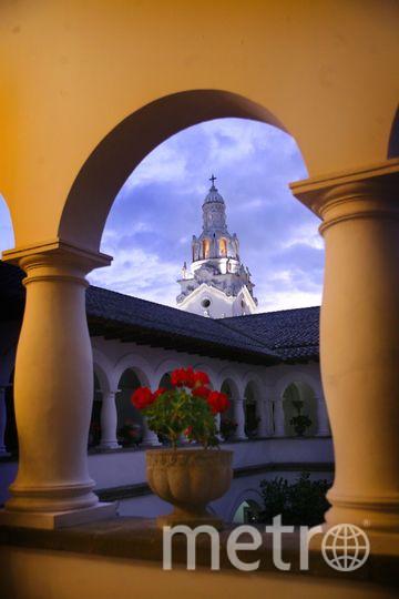 Герань в Кито. Фото www.metrophotochallenge.com.