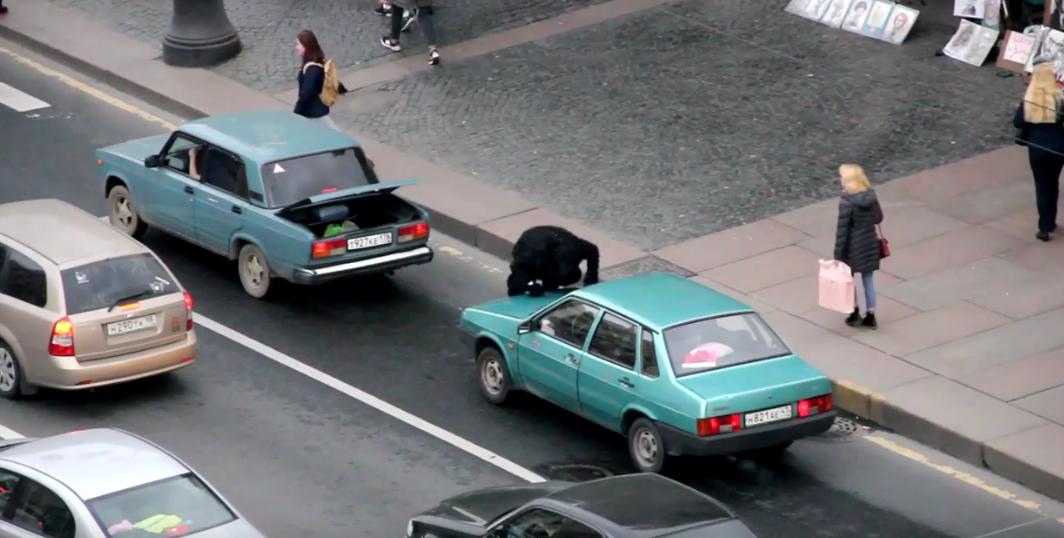 По Петербургу прогулялась обезьяна, воровавшая бананы и пиво. Фото Все - скриншот YouTube