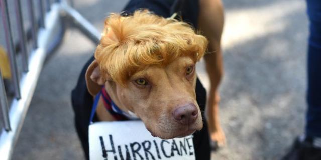 Парад собак в Нью-Йорке.
