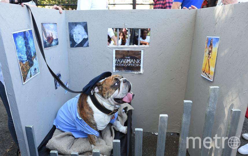 Парад собак в Нью-Йорке. Фото AFP