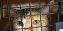 Депортированный из Швеции россиянин пытался вернуться в страну за котом