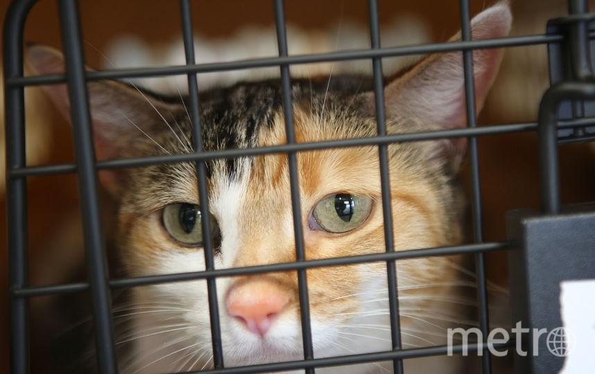 Кот в клетке. Фото Getty