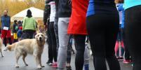 В Кузьминках собаки показали своим людям, как надо бегать