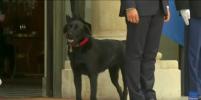 Появилось видео, как собака Макрона сходила в туалет прямо в Елисейском дворце