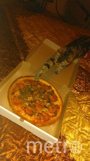 Решив сделать фото пиццы, отчётливо было видно как кот интеллигентно сидел в сторонке. Но так как фото сделано было в кромешной темноте,то никто не заметил ловкого жеста кота, только отсутствие кусочка колбаски на пицце. Куда он подевался, увидели уже на фото. Фото Лия