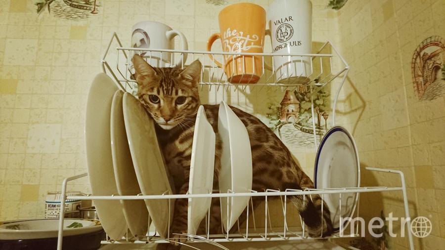 Когда не знаешь где искать своего любимого кота, знай, он где-то поблизости от еды =) Знакомьтесь, это малыш Сэм. Любитель залезать повыше и, пока никто не видит, прятаться в холодильнике. Фото Суламита, читательница Metro.