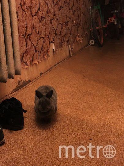 Нашу кролю зовут Василиса, ещё та хулиганка! Порвала все обои, погрызла провода и добралась до обуви. И все равно мы ее любим. Фото Татьяна