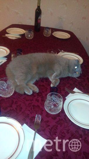 Меня зовут Татьяна, у меня есть кошка Фрося. Она тихая и спокойная, очень интеллигентная, принимает участие в каждом празднике в качестве украшения стола!