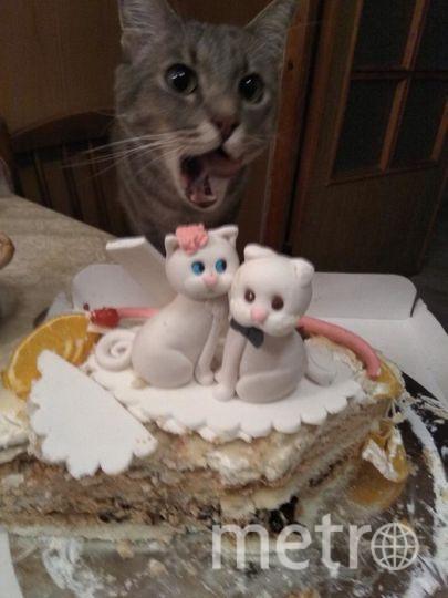 Нашему Ваське 6 лет, с самого рождения он обожает сладенькое, а уж этот торт точно для него. Фото Екатерина.